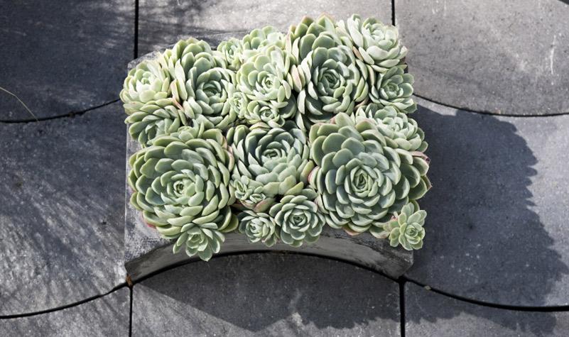 Ivåg planteringskärl